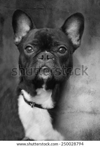 abstract black and white small dog portrait, grunge background