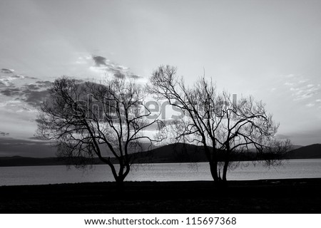 abstract black and white tree background