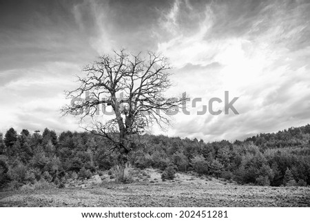 abstract black and white tree silhouette and dramatic sky