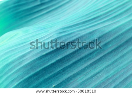 Abstract blue background : Texture of tropical leaf