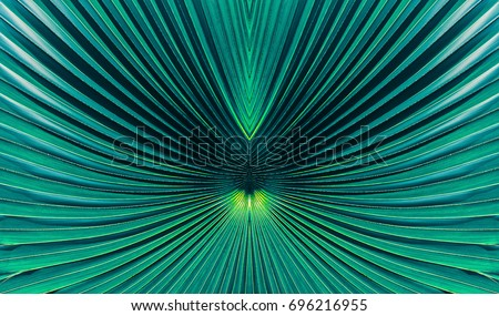 abstract blue stripes from nature, tropical palm leaf texture background, vintage tone #696216955