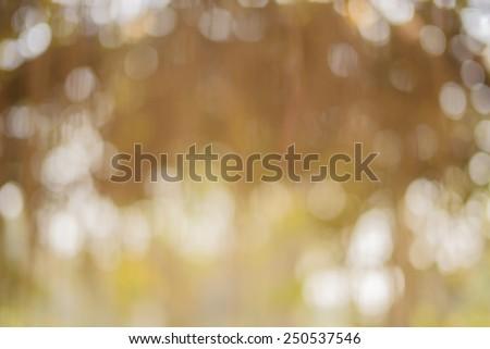 Abstract blur background, blur background,blur, light bokeh