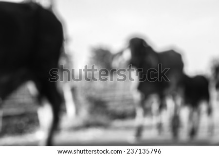 abstract blur background of cows are walking in the countryside #237135796
