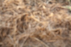 abstract blur brown natural Straw, natural dry grass background.Closeup textured brown Straw background, Golden yellow straw,natural Dry grass background.