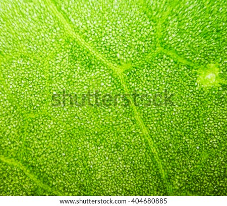 abstract blur close up shot of Green aquatic plant cells under microscope. #404680885