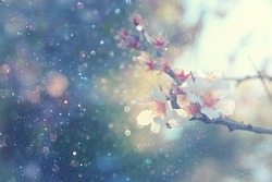 Abstract blurred background of spring white cherry blossoms tree. selective focus. vintage filtered with glitter overlay