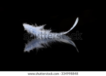 Abstract blurred blue feather over black background   #334998848