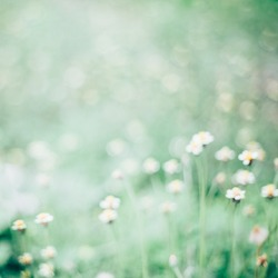 Abstract blurred green nature background.
