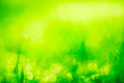 Abstract blurred image of green grass in the sunlight. Summer texture background. Warm colors. Copy space.