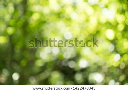 Abstract blurred nature background with bokeh for creative designs. Green leaves bokeh out of focus background from nature forest. Green Nature spring and natural light in blur style with copy space.
