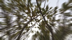 Abstract blurred photo of Frangipani (Plumeria) tree and sky cloud background, green leafy plants of various forms found in nature, zoom in and motion on blur background, ant eye view.