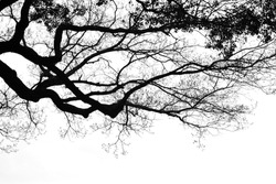 Abstract blurred tree branches in black and white