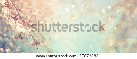 Abstract blurred website banner background of of spring white cherry blossoms tree. selective focus. vintage filtered with glitter overlay #378728881