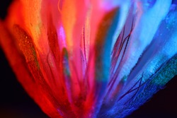 Abstract blurry flower backgrond photo. Beauty blur backdrop. Macro leaf detail.