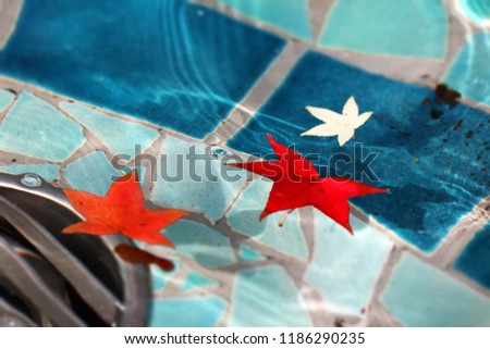 Abstract blurry image. Bright red sweetgum leaves in pool water. Turquoise blue cracked tiles. Selected focus.