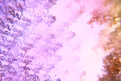 Abstract blurry psychedelic background. Lomography magic landscape. Trees against the sky. Soft focus. Fantasy clouds. Purple, pink, yellow and violet colors.