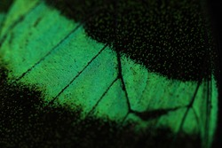 abstract butterfly wing macro green