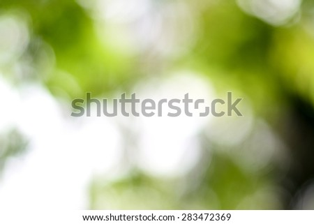 Abstract circular green and dark leaf bokeh blur for natural background