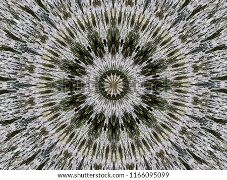 Abstract circular ornament of the modified spread image of white flowers Alyssum. The circular pattern in the natural colors of the flowers Alyssum.