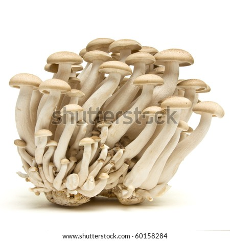 Shimeji Mushrooms Mushrooms Buna Shimeji