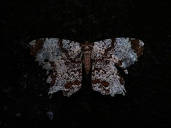 Abstract color butterfly with black and white pattern on floor background