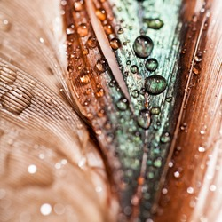Abstract composition with colorful hen feather with water drops