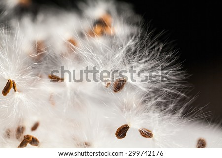 Abstract composition with dried plants seeds. Looks like dandelion seeds
