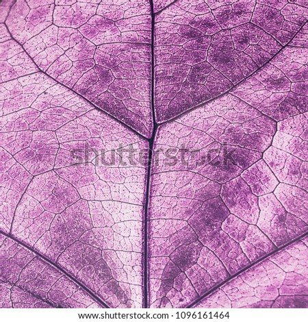 abstract concept , inverted uktra violet colors of leaves and plants and nature textures of double exposure images , creative , isolated on black background