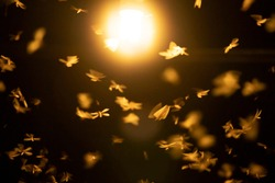 Abstract, creative motion blur background of flying insects in the night.