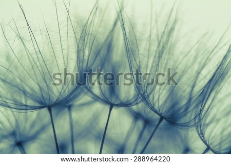 Abstract dandelion flower background, extreme closeup. Big dandelion on natural background. Art photography  - Shutterstock ID 288964220