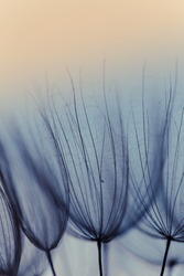 Abstract dandelion flower background. Seed macro closeup. Soft focus. Vintage style