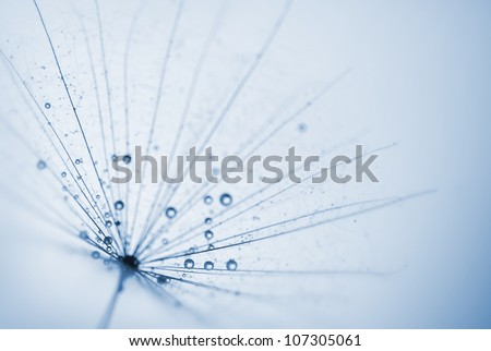 abstract dandelion flower background with water drops