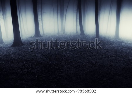 abstract dark forest with fog