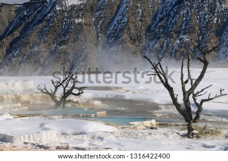 Abstract dead trees and Mount Everts ridges at the Main Terrace at Mammoth Hot Springs Yellowstone Park in winter