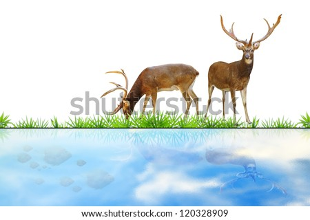 Abstract deer eating grass on white.