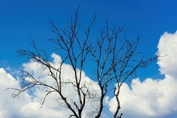abstract dry bare tree branch on a blue sky and clouds background. Dramatic view