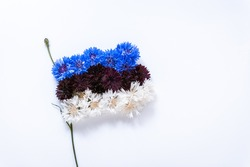 Abstract flag of Estonia made of cornflower flowers with white background. Happy independence day of Estonia. Flag background. Close-up. Soft focus.