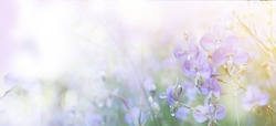 Abstract floral backdrop of crested serpent sweet purple flowers in the field with soft style.Banner background with copy space.