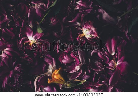 abstract floral background #1109893037