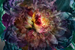 Abstract floral background, fractal parts of the flower red and purple colors.