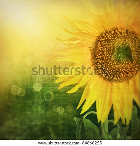 Abstract floral background with sunflower in the garden and sunlight rays with bokeh lights in the back.