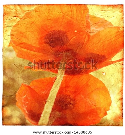 Abstract floral grunge background with two poppy flowers over old shabby texture.