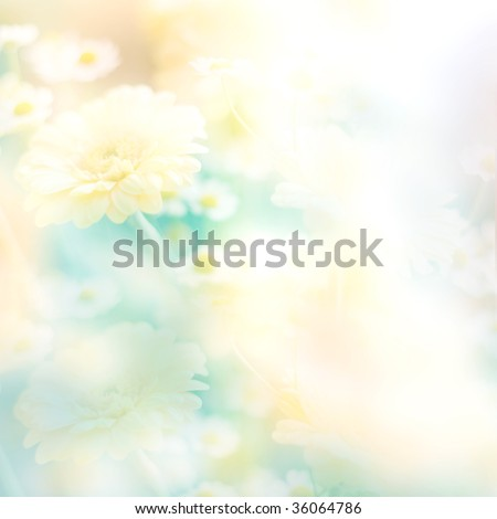 abstract floral pastel toned background with camomiles