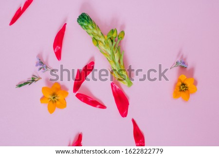 Abstract flower composition on pink background