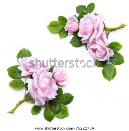 abstract flowers frame  isolated on white background
