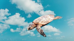 Abstract funny cute turtle flying in the sky. Travel and save animal Concept