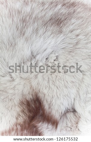 abstract fur texture background