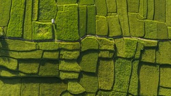 Abstract geometric shapes of agricultural parcels in green color.Bali rice fields. Aerial view shoot from drone directly above field.