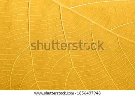 Abstract gold fortuna leaves close up Foto stock ©