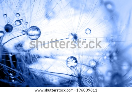 Abstract gradient colorize macro photo of plant seeds dandelion with water drops